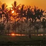バリ島ウブド近郊2014年11月21日(金)の朝陽