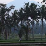 バリ島ウブド近郊2014年12月22日(月)の朝