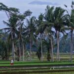 バリ島ウブド近郊2014年12月28日(日)朝の風景