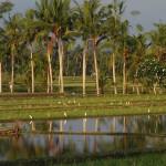 田んぼの耕耘と白鷺