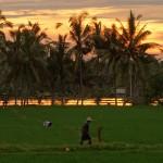 バリ島ウブド近郊2015年1月23日(金)の朝陽とアグン山