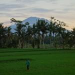 バリ島ウブド近郊2015年1月24日(土)の朝陽とアグン山