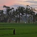 バリ島ウブド近郊2015年2月9日(月)の朝陽