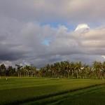 バリ島2015年のNyepi(ニュピ)