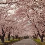 【埼玉の桜が見られる名所】長瀞で満開の桜と蕎麦を堪能してきました