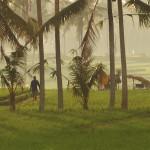 バリ島ウブド近郊より2015年8月4日(火)朝の様子