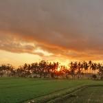 バリ島ウブド近郊より2015年8月5日(水)朝の様子