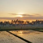バリ島ウブド近郊2015年12月27日(日)の朝陽