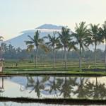 バリ島ウブド近郊2015年12月30日(水)の朝陽【動画有り。椰子並木の向こうへ行って来ました】