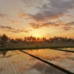 バリ島ウブド近郊2015年12月31日(木)大晦日の朝陽