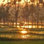 【動画あり】バリ島ウブド近郊2016年1月23日(土)の朝陽