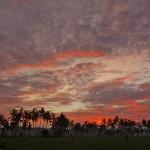 バリ島ウブド近郊2016年2月10日(水)ガルンガンの朝