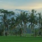 バリ島ウブド近郊2016年2月26日(金)の朝陽はギリギリ拝めず