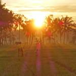 バリ島ウブド近郊2016年2月28日(日)の朝陽