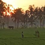 バリ島ウブド近郊2016年2月29日(月)閏日の朝陽