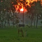 【午前6時頃に撮影した動画あり】バリ島ウブド近郊2016年3月8日(火)ニュピ前日、大晦日の朝陽