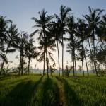 【360度パノラマ動画あり】バリ島ウブド近郊2016年3月9日(水)ニュピの朝