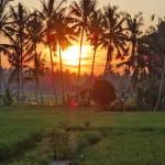 バリ島ウブド近郊2016年3月26日(土)の朝陽