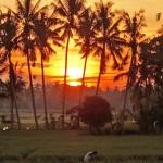 バリ島ウブド近郊2016年3月30日(水)の朝