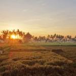 バリ島ウブド近郊2016年4月5日(火)朝の風景