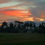 バリ島ウブド近郊2016年5月29日(日)朝の風景