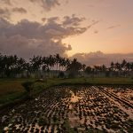 バリ島ウブド近郊2016年7月29日(金)朝の風景