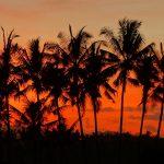 【朝焼け・アグン山と白鷺の動画あり】バリ島ウブド近郊2016年8月25日(木)朝の風景