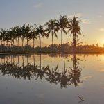 【水田に映るアグン山、朝陽の動画あり】バリ島ウブド近郊2016年8月28日(日)朝の風景