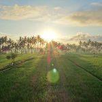 バリ島ウブド近郊2016年9月26日(月)朝の風景