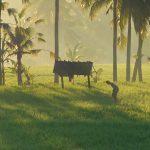 【日の出と朝陽に輝く田んぼの動画2本立て】バリ島ウブド近郊2016年9月27日(火)朝の風景