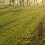 バリ島ウブド近郊2016年9月28日(水)朝の風景