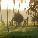 【日の出が綺麗でいつも以上に日の出画像をアップしてしまった】バリ島ウブド近郊2016年9月29日(木)朝の風景