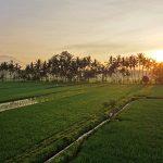 【朝焼けと屋根上からの動画あり】バリ島ウブド近郊2016年9月30日(金)朝の風景