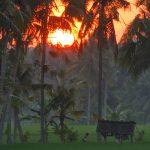 バリ島ウブド近郊2016年10月9日(日)朝の風景