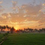 バリ島ウブド近郊2016年10月14日(金)朝の風景