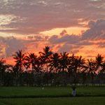 バリ島ウブド近郊2016年11月10日(木)朝の風景