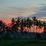 バリ島ウブド近郊2016年11月15日(火)朝の風景