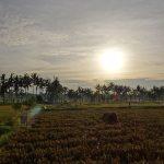 バリ島ウブド近郊2016年12月02日(金)朝の風景