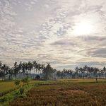 バリ島ウブド近郊2016年12月03日(土)朝の風景