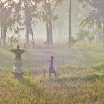 バリ島ウブド近郊2016年12月20日(火)朝の風景