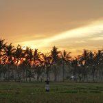 バリ島ウブド近郊2016年12月21日(水)朝の風景