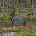バリ島ウブド近郊2016年12月28日(水)朝の風景