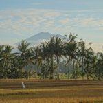 バリ島ウブド近郊2016年12月14日(水)朝の風景