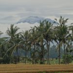 バリ島ウブド近郊2016年12月15日(木)朝の風景
